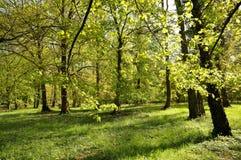 春天树和剪影沿公园道路 免版税图库摄影