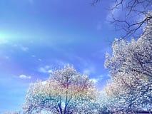 春天树和天空 图库摄影