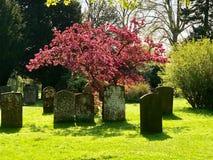 春天树在墓地 库存图片