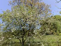 春天树在庭院里 免版税库存照片