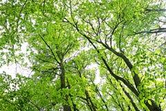 春天树在森林里 库存图片