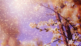春天树花在雨中 免版税库存照片