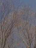春天树 库存照片