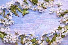 春天框架在老葡萄酒蓝色bo背景开花  免版税库存照片
