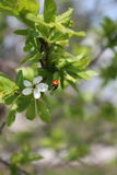 春天框架 库存照片