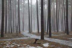 春天森林使模糊 库存照片