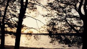 春天森林和湖日落的在阳光下 股票视频