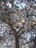 春天森林在克里米亚半岛山的早晨 库存图片