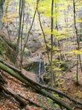 春天森林在克里米亚半岛山的早晨 免版税图库摄影