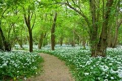春天森林地 库存图片