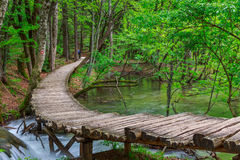 春天森林小河在Plitvice国家公园 免版税库存图片