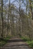 春天森林步行 免版税图库摄影