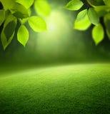 春天森林背景 免版税库存图片