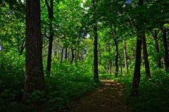 春天森林足迹 库存图片