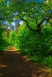 春天森林足迹 图库摄影