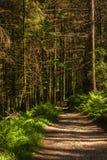 春天森林道路 Glenashdale森林,艾伦,苏格兰 库存照片