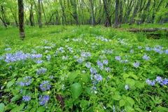 春天森林风景伊利诺伊 免版税库存图片