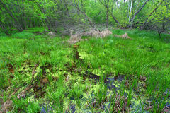 春天森林风景伊利诺伊 库存照片