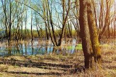 春天森林风景-岸边的林木充斥了与在晴朗的春天天气的溢出的河水 免版税库存图片