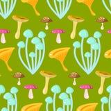 春天森林黄蘑菇和格里布蘑菇 免版税库存图片