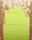 春天森林 库存图片
