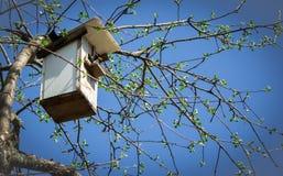 春天椋鸟在树上小屋里 免版税库存照片