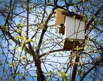 春天椋鸟在树上小屋里 库存照片