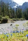 春天植物在德国阿尔卑斯 免版税图库摄影