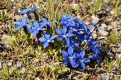 春天植物在法国阿尔卑斯 库存照片