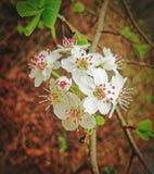 春天植物群 库存图片