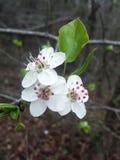 春天植物群 免版税库存照片