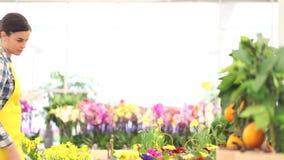 春天概念,妇女卖花人照料花植物 股票录像
