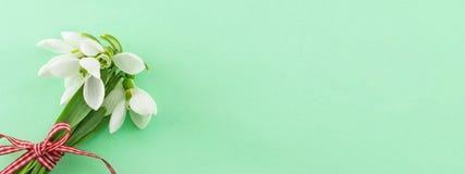 春天横幅 新鲜的snowdrops花束 免版税图库摄影