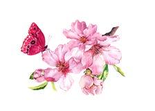 春天樱桃、佐仓花或者桃红色苹果开花和蝴蝶 华丽水彩 皇族释放例证