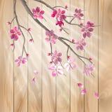 春天樱花在木纹理开花 免版税库存图片