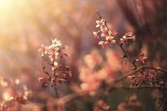 春天樱花抽象背景  库存图片