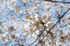 春天樱花纽约 免版税库存图片