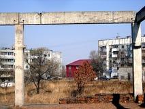 春天橡木在城市 免版税库存照片