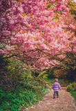 春天步行 免版税库存照片
