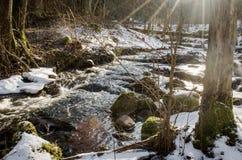 春天河在森林里 免版税库存照片