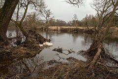 春天洪水 在冰融解以后的河 库存照片