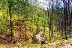 春天深绿色森林 在谷的山小河 免版税库存照片