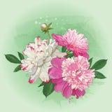 春天牡丹花束贺卡的 免版税库存图片