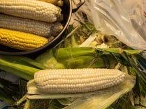 春天玉米 库存图片