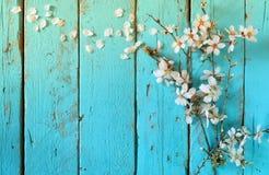 春天白色樱花树的图象在蓝色木桌上的 葡萄酒被过滤的图象 免版税库存照片