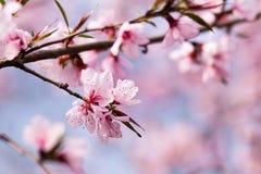 春天的信使 图库摄影