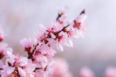 春天的信使 免版税库存照片