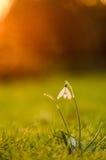 春天的力量 库存照片