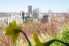 春天的匹兹堡 库存图片