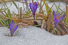 春天的喊叫者 图库摄影